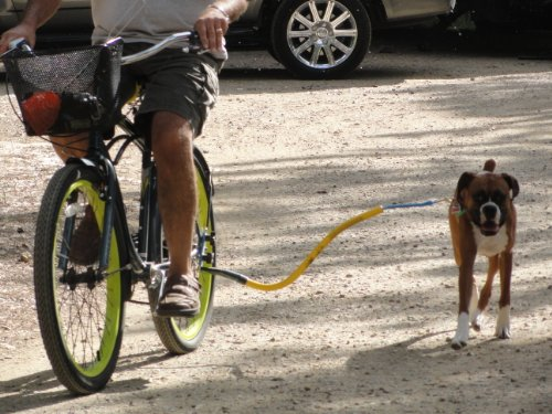 Bike tow leash yellow